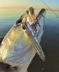 chug bug trout