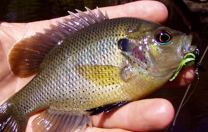 Stumpknocker john kumiski outdoor communications for South florida freshwater fish