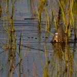 tailing redfish john kumiski