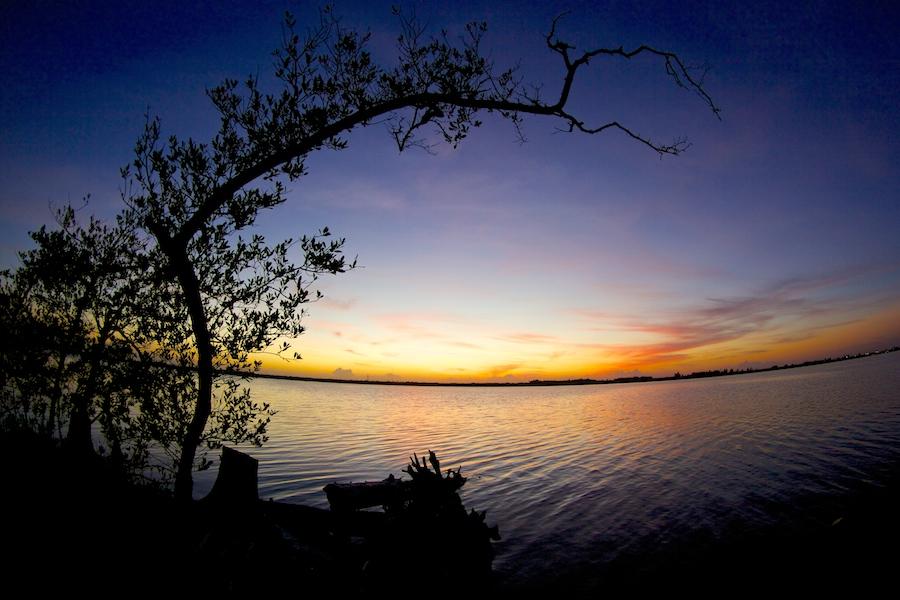 sunset mangrove
